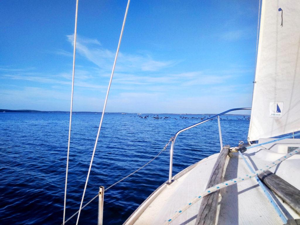Navigation avec les cormorans